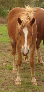 horses lambert