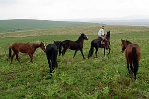 horses mics leading foals